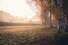 Sunrise in the fog (Kyösti Ilmari Keränen) Tags: autumn fog sunrise canon suomi finland finnish kyösti keränen