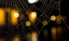 Cobweb Bokeh (Tommi H.) Tags: macro canon eos spider dc bokeh web sigma os cobweb af hsm 1770mm f284 60d