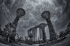 Nova Trees (chaoticbusher) Tags: morning blue trees white distortion black texture monochrome nova weather marina sunrise giant landscape photography rising bay interestingness nikon singapore exposure raw moody gloomy body details grain perspective fisheye explore single fullframe monday nikkor sands dslr fx 16mm d800 2014 supertrees gardenbythebaysouth