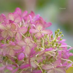 Cherish (Ans van de Sluis) Tags: autumn flower fall forest