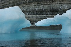 Glacial Icebergs Birding Cliffs Prince Leopold Island Lancaster Sound Canada High Arctic (eriagn) Tags: summer white canada cold history ice expedition nature weather birds rock season spectacular landscape photography grey kill wildlife extreme birding documentary calm historic polarbear seal strata icefloes blinding inuit northamerica mirrored bleak remote cubs prey iceberg zodiac geology frigid nunavut survival climate arid nesting northwestpassage birdsanctuary sheer fulmars kittiwakes seamammal qikiqtaaluk moodiness canadianarctic beardedseal akademikioffe franklinexpedition devonisland higharctic arcticskies lancastersound princeleopoldisland qausuittuq princeregentinlet akademikvavilov polarbeartwins russianscientificvessel quttiktuq eriagn ngairehart parrychannel 70thanniversarystroch po