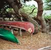(alliance1) Tags: color film analog kodak scanned bodegabay salmoncreek 2014 portra400 fujifilmgf670