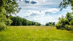 Auf der Pfaueninsel (Hydrocore Photography) Tags: berlin deutschland wiese himmel pfaueninsel rasen