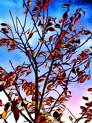 Fall reds and oranges #iphoneography #landscape #fall #coolblue #hotreds (Richard F Adams) Tags: fall landscape coolblue hotreds iphoneography