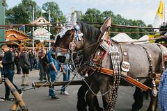 DSCF2983 (stottsan) Tags: travel vacation horse festival germany munich mnchen europe oktoberfest explore exploration wiesn theresienwiese spatenbru vsco vscofilm fujix100s