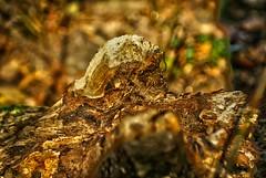The Monster - Le Monstre (p.franche - Sorry buzy) Tags: wood brussels nature europe belgium belgique bokeh bruxelles brussel hdr schaarbeek schaerbeek bois belge sonyalpha100 parcjosaphat josaphatpark oloneophotoengine pascalfranche pfranche
