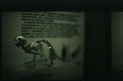 (Max Miedinger) Tags: blackandwhite fish film museum analog blackwhite nikon acquarium slide f100 r epson pelicula process biancoenero reversal selfdeveloped pellicola fomapan v700 s