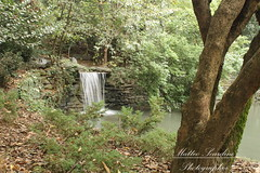Cascatella (Matteo Scardino) Tags: park parco tree water trunk acqua gorgonzola cascatella
