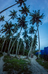 DSC07127.jpg (Vaajis) Tags: asia village palmtrees malaysia borneo mabul bluemoment