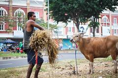 36 (Garry Andrew Lotulung) Tags: street portrait bw monochrome canon children indonesia cow blackwhite child muslim islam religion goat oldman human kambing adha humaninterest sapi tangerang idul eidmubarak iduladha canon7d