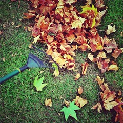 My fave season (Huey Yoong) Tags: uk autumn england london fall grass leaves garden gardening lawn rake iphone southengland mecklenburghsquare iphonepictures iphonography shotwithaniphone photostakenwithaniphone