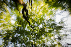 Flashing tree (Paul van Agthoven) Tags: trees sun nature mushroom canon mushrooms dof forrest zoom bokeh herfst nederland natuur sigma 100mm leafs bos mystic paddenstoelen bossen 550d