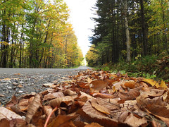 When the leaves fall in love with the ground! (ashpmk) Tags: green fall leaves yellow vermont