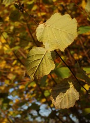 Autumn before the door... (two_luckies) Tags: dof laub herbst bltter