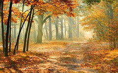 nature-autumn-forest