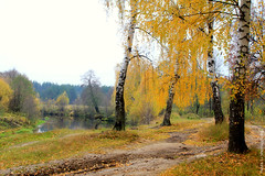 Muddy season (gráce) Tags: road autumn trees fall nature water leaves forest river landscape puddle foliage birch muddy