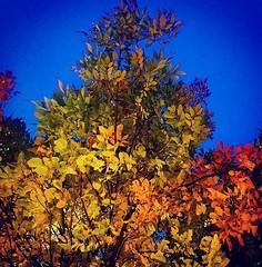 a_csu fall colors4