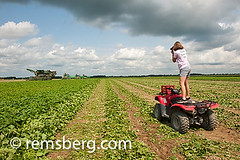 Female farmer photographing the cucumber harvest on her farm while standing on her ATV Four Wheeler in Preston, Maryland, USA (Remsberg Photos) Tags: camera plants usa tractor female photography farm cucumber harvest maryland machinery ag preston atv crops farmer agriculture innovation pickle harvester industrious agriculturethings cucumberpicker