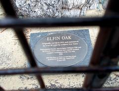 LONDON 1724 (RANCHO COCOA) Tags: wood uk england tree london garden elf trunk kensington kensingtongardens carvings sculpted elves theelfinoak