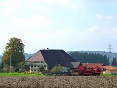 Kartoffelernte in Oschwand (HITSCHKO) Tags: schweiz switzerland traktor suisse landwirtschaft bern svizzera bauernhof kartoffeln svizra nutzpflanze oberaargau sammelroder ochlenberg streusiedlungsgemeinde buchsibergen