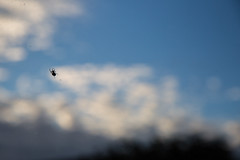 19 - Oct - 2014 - Cloud Spider (Pittypomm) Tags: silhouette clouds spider arachnid arthropod lazyphotography