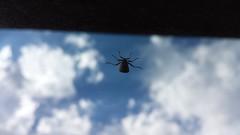 20141019_151232.jpg (stellardot) Tags: macro window glass mobile bug insect phone samsung device galaxy s4 sgh m919