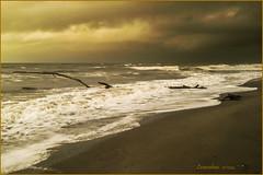 tempesta (leon.calmo) Tags: canon nuvole mare toscana albero tronco onde eos50d maremosso nuvoloni marinadivecchiano leoncalmo