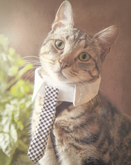 off to work (praline3001) Tags: morning cat feline tabby petphotography