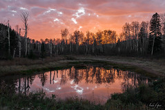 : duck pond at sunset : (~ Linda Speer ~) Tags: