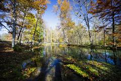 Maramec Spring Park (Notley) Tags: park trees reflection fall water rural forest spring october fallcolors country reflect ozarks 2014 10thavenue ruralmissouri notley notleyhawkins missouriphotography maramecspringpark phelpscountymissouri httpwwwnotleyhawkinscom notleyhawkinsphotography