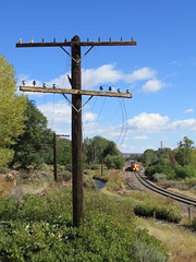 Here Comes the Train! (Patricia Henschen) Tags: royalgorgeroute royalgorge canoncitycolorado arkansasriver railroad locomotive vistadome denverriogrande usroute50