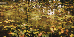 autumn dreams (desomnis) Tags: autumn autumnfoliage fall nature colors leaves canon 50mm austria sterreich colorful colours dof natural bokeh branches autumncolors foliage photomerge colourful autumnal obersterreich 50mmf14 deciduoustrees deciduousforest canon50mm upperaustria mhlviertel canon50mmf14 canon50mmf14usm canon6d canoneos6d desomnis