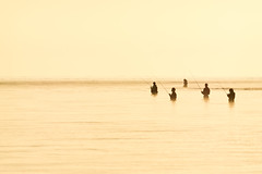 dreamers (k n u l p) Tags: morning lake fishing sony minimalism tamron 70200mm angler 琵琶湖 釣り a001 nex7 和邇川