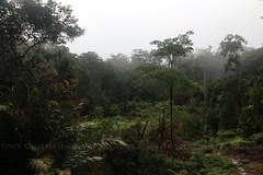 At 7 am, overlooking the wild Borneo (Vince_Adam Photography) Tags: tropicalrainforest mossyforest highaltitude hill mountain sabah maliaubasin borneo malaysia eastmalaysia lostworldofsabah
