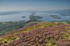 Above the Bonnie Banks of Loch Lomond (juliecarmen.fahy) Tags: scotland ecosse water landscape loch lomond lake view heather trossachs highlands
