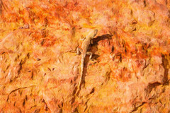 Desert Spiny Lizard (Serendigity) Tags: coloradoplateau utah waynecounty sketch usa nationalpark desert lizard capitolreef reptile unitedstates painting art