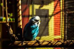 Angry Bird :D (GreenEyes Photography) Tags: rennes greeneyesphotography bird oiseau batiment city ville vilaine eau water banc bleu couleur noir et blanc sepia love couple story