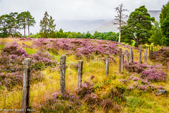 Cairngorms walk (martin.baskill) Tags: mist heather scotland cairngorms landscape