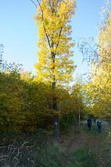 DSC_0301 (Pter_Szab) Tags: mtra matra hungary nature autumn colours mountains galyateto galyatet forest hiking nationalpark landscape