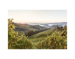 Vineyards in Gamlitz with a view Slovenia (Ren Patzelt) Tags: landscape gamlitz sunrise wineyard canon6d green mist