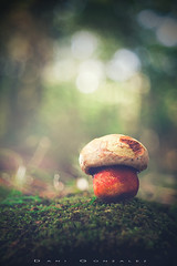Boletus destrozadus (www.studio360fotografia.es) Tags: primotar setas valdeinfierno meyeroptik primotar50mmf35 d700 seta nikon mushroom hongo bosque forest bokeh desenfoque danigonzalez