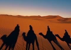 Morning Caravan! (christine zenino) Tags: desert camels sunrise morocco saharadesert