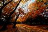 maruyama 340 (kaifudo) Tags: sapporo hokkaido japan maruyamapark autumn autumncolor autumnleaves 札幌 北海道 円山 円山公園 秋 紅葉 nikon d750 nikkor afs 1424mmf28ged 早朝 morning 落ち葉