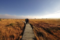 Haute Fagne / Hohes Venn (Colognid) Tags: hiking haute fagne hohes venn wandern moor sumpf herbst autumn nature park eifel belgien belgium steg