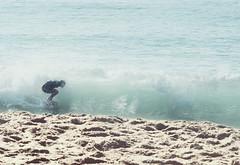 seal16 (David Behar) Tags: seal beach california skimboarding