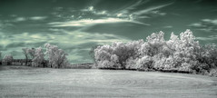 IR Field (It's my whole damn raison d'etre) Tags: ir infrared trees field farm virginia va loudoun county bw white green monochrome nikon d90 hdr alex erkiletian