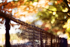 Never give up on a dream just because of the time it will take to accomplish it.  The time will pass anyway. (Sandra H-K) Tags: fencefriday fence hff bokeh bokehlicious autumn fall colorful red yellow green pretty outside outdoors dof depthoffield dreamy soft softfocus day daytime helios402 foliage orange