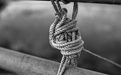 All tied up... (einarsoyland) Tags: filmisnotdead rodinal r09 developed nikonf3t zeissplanar1450mm zf2 carlzeiss blackandwhite blackwhite fun norway sotra rope knot rail metal bokeh truebw true2bw planar5014zf