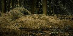 Fallen (Stuart Feurtado) Tags: track chilternhills buckinghamshire landscape tree forest woods bucks path nikon green autumn d810 foliage barnsesgrove