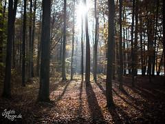 Autumn Forest Sun (judithrouge) Tags: germany deutschland forest sun contrejour gegenlicht sonne wald autumn herbst strahlen sonnenstrahlen rays light